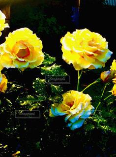 花のクローズアップの写真・画像素材[4394426]