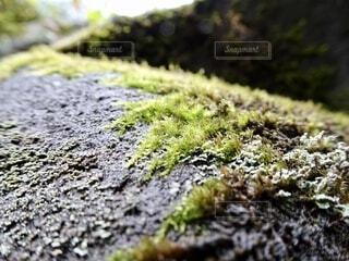 岩のクローズアップの写真・画像素材[3796023]