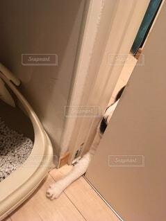 トイレさせてくれの写真・画像素材[3663226]
