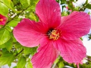 花のクローズアップの写真・画像素材[3663680]