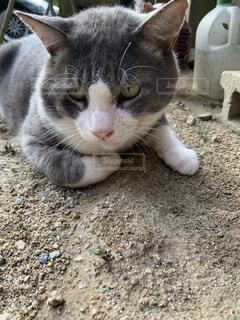 地面に横たわる猫のクローズアップの写真・画像素材[3675512]