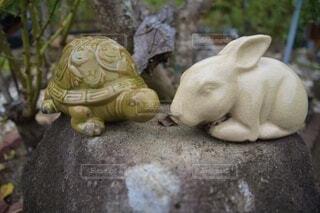兎と亀の写真・画像素材[3701556]