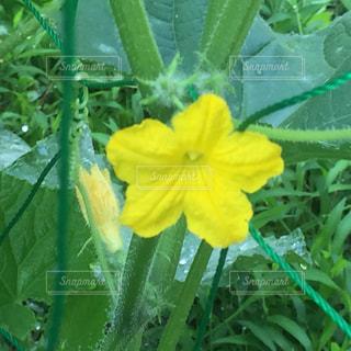 花の写真・画像素材[535425]