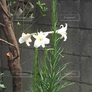 花の写真・画像素材[535428]