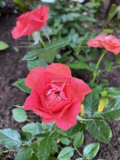 植物の上のピンクの花の写真・画像素材[3668338]