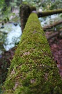 苔のクローズアップの写真・画像素材[3667288]