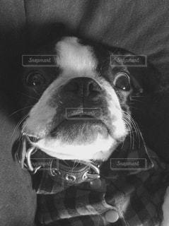 犬の写真・画像素材[152965]