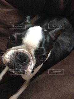 犬の写真・画像素材[152966]