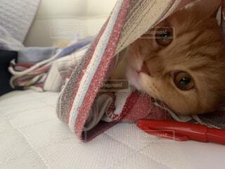 赤ペンをズボンの中に隠す子猫の写真・画像素材[3667410]