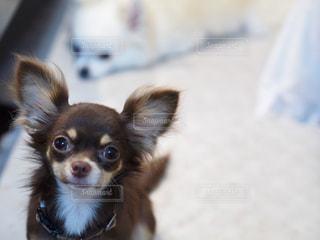 犬の写真・画像素材[153132]