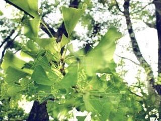 緑が爽やかな木の風景の写真・画像素材[3687057]