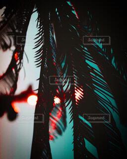 ヤシの木の写真・画像素材[3672995]