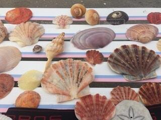 綺麗な貝の写真・画像素材[3674431]