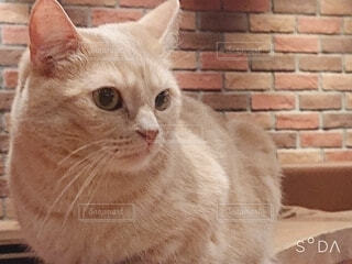 カメラを見ている猫の写真・画像素材[3674722]