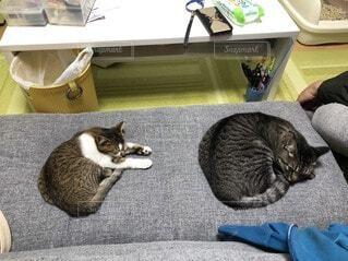 ベッドに横たわる猫の写真・画像素材[3675377]