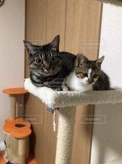 タワーに座っている猫の写真・画像素材[3675382]