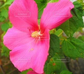 花の写真・画像素材[3677385]