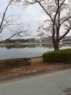 3/28 朝散歩 1の写真・画像素材[4287159]