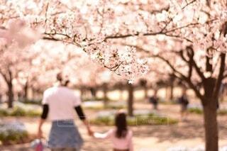 桜のトンネルの写真・画像素材[3678227]