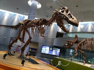 ティラノサウルスの写真・画像素材[3678324]