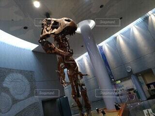 ティラノサウルス(「・ω・)「 ガオーの写真・画像素材[3678642]