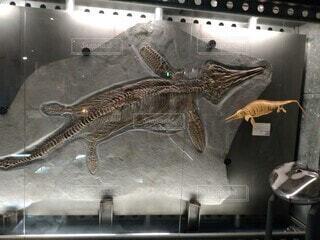 海洋爬虫類化石の写真・画像素材[3680916]