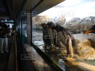 |д꒪ͧ)…ペンギンの写真・画像素材[3680923]