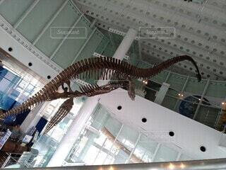 プレシオサウルスの稼ぎの写真・画像素材[3682521]