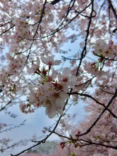 花の写真・画像素材[458989]