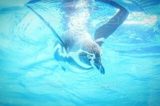 swimの写真・画像素材[3712009]