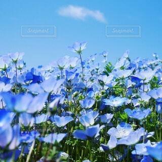 ブルーの世界観の写真・画像素材[4378914]