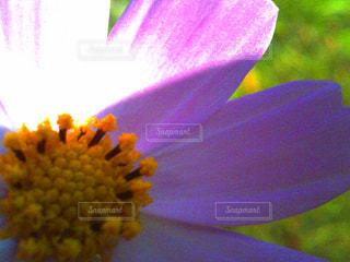 花の写真・画像素材[153937]