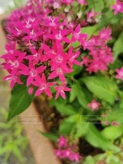花のクローズアップの写真・画像素材[3685187]