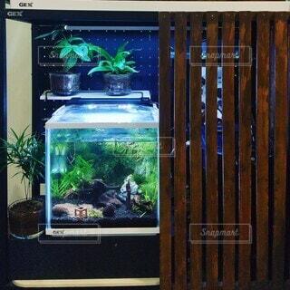 水槽と観葉植物の写真・画像素材[3681557]