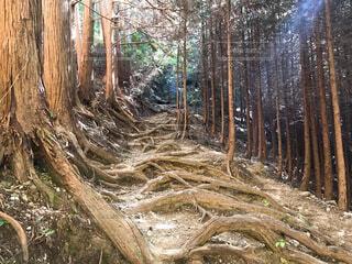 木の隣に干し草の山の写真・画像素材[3683612]