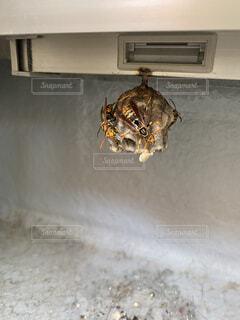 ベランダにできた蜂の巣の写真・画像素材[3683778]