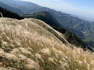 ススキと山脈の写真・画像素材[4875894]