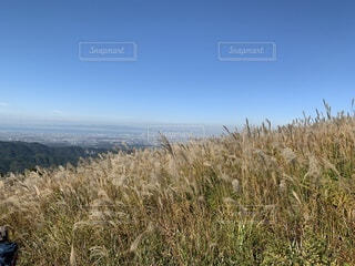 ススキから遠くに見える街並みの写真・画像素材[4875893]
