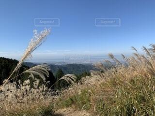 ススキからの風景の写真・画像素材[4875891]