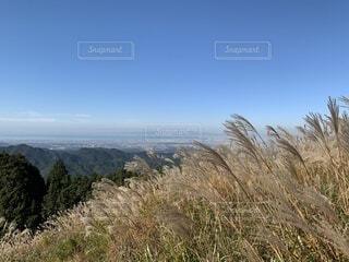 ススキと青空の写真・画像素材[4875895]