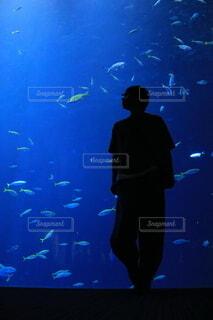 水槽と彼の写真・画像素材[3682546]