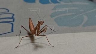 地面に昆虫の写真・画像素材[3683291]