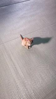 訴える猫の写真・画像素材[3686003]