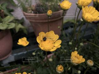 花と虫の写真・画像素材[3687763]
