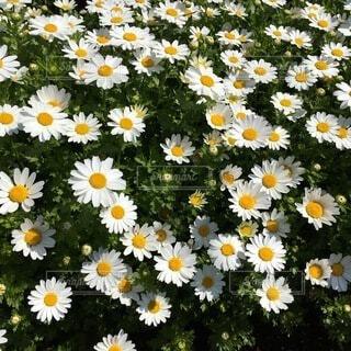 花の写真・画像素材[3689099]