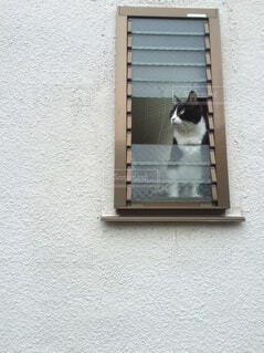 壊れた窓から猫の写真・画像素材[3689108]