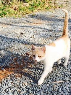 人懐こい猫の写真・画像素材[3704765]