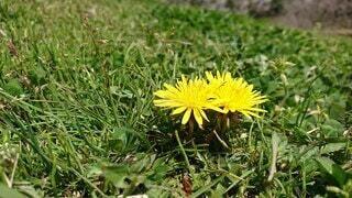 花のクローズアップの写真・画像素材[3688954]