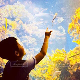 水族館ではしゃぐ子どもの写真・画像素材[3688945]