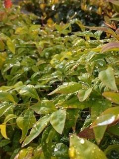 緑の葉のクローズアップの写真・画像素材[3719927]